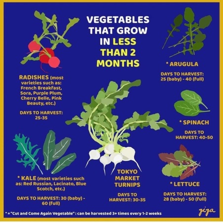 Victory garden, victory gardens, victory gardens today, what did victory gardens do, growing a modern victory garden, victory garden coronavirus, victory garden covid-19, victory garden catholic, victory garden homestead, victory garden homemaker,